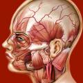 Atlante di Anatomia (AppStore Link)