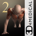 iMuscle 2 (AppStore Link)