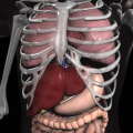 Anatomy 3D: Organs (AppStore Link)