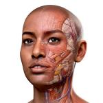 Immagine per Complete Anatomy 2018 +Courses