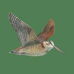 Immagine per Richiami Caccia e Birdwatching - Versi Uccelli
