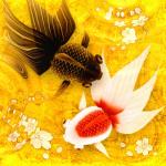 Immagine per Wa Kingyo - Pesce Rosso