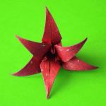 Immagine per Origami Flowers
