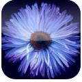 Flower Power: il tuo assistente personale per un omaggio floreale perfetto | QuickApp