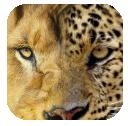 Animal Companion: un'utile applicazione per gli amanti di