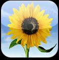 Tutorial iSpazio: Importare le fotografie direttamente nel Rullino Fotografico dell'iPhone anziché in un album