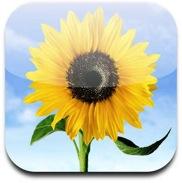 Problemi di privacy anche per il Rullino Fotografico di iOS