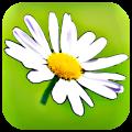Blumy: scegliamo un fiore ed inviamolo via Mail insieme al suo significato   QuickApp