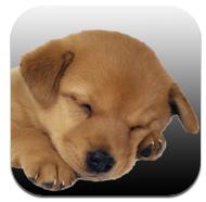 myPets: la pratica app per sapere tutto sui nostri animali | QuickApp