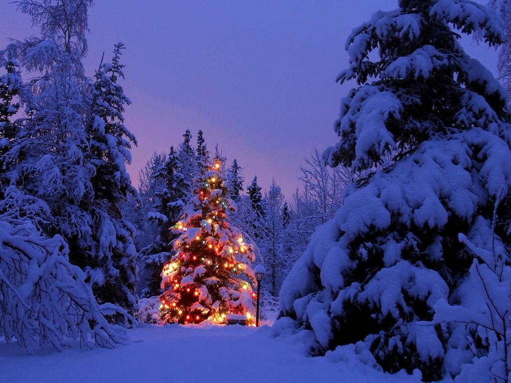 Immagini Natale 1024x768.Questo Natale Le Luci Dell Albero Si Accendono Con Siri Ispazio