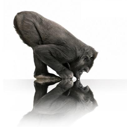gorillafi