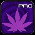 strains pro