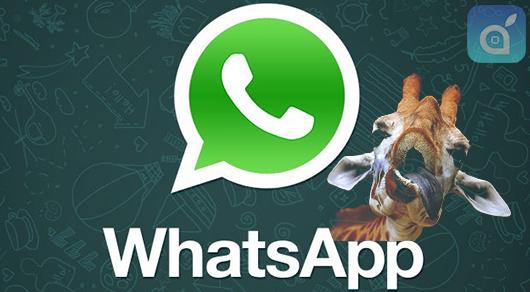 giraffa whatsapp