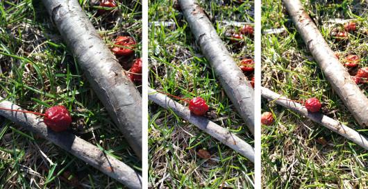 5s_m8_s5_photo_comparison_18