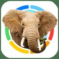 Scoprite il fantastico mondo animale con Animals 100 – Animali Reali [Video] | Quickapp
