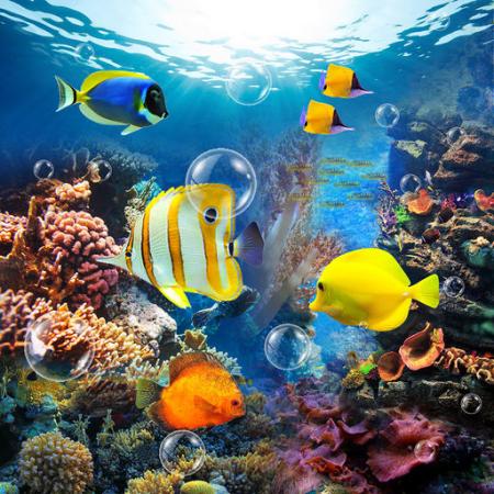 The Amazing Aquarium Clock, immergiti nel tuo iPhone| QuickApp