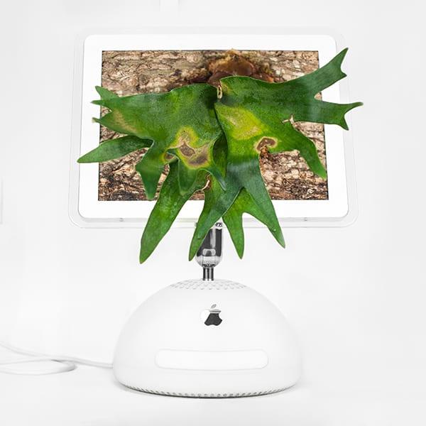 plant_you_mac_imacerium_monsieur_plant_2016_4