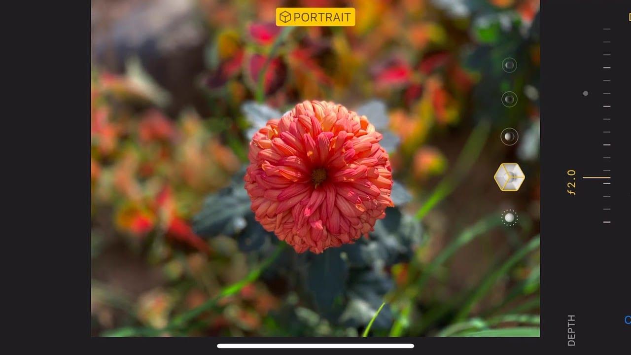 iPhone XS: fantastiche foto realizzate con la nuova Modalità Ritratto e Smart HDR